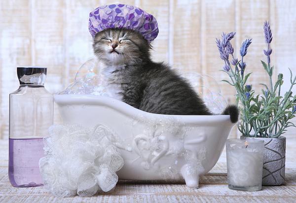 Kitten in shower cap in a tub