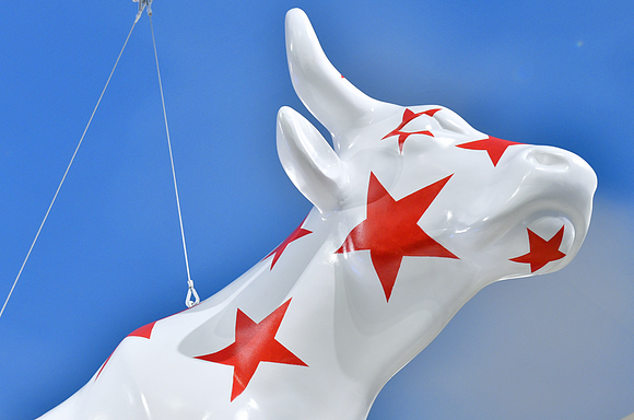 Macy cow with red stars