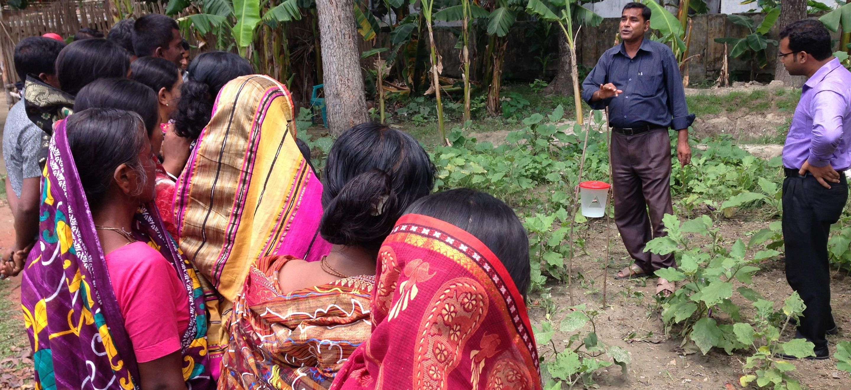 Farmers gathered in Bangladesh learn how to use low-cost, organic pheromone traps that save money while protecting crops and the environment.