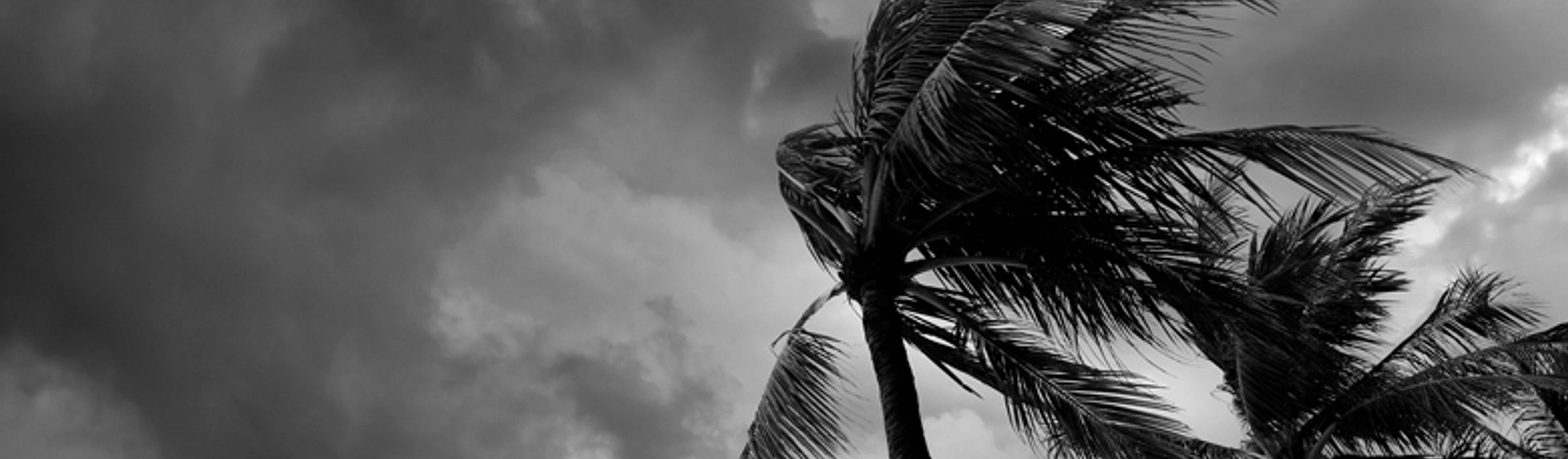 Palm trees being blown in the wind as a storm approaches