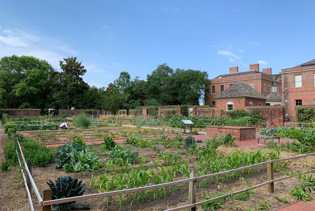 The Kitchen Garden in Summer